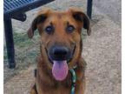 Adopt Jack a Mixed Breed