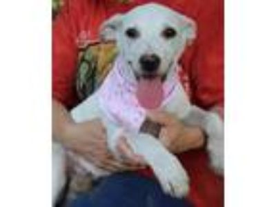Adopt Betty a White Shepherd (Unknown Type) / Mixed dog in Remlap, AL (23263570)