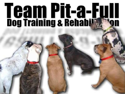 ALL BREED Dog Training & Rehabilitation
