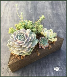 Colorful Succulents in a Reclaimed Wood Triangle Planter