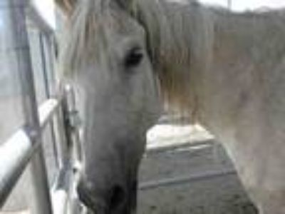 Adopt April a Arabian