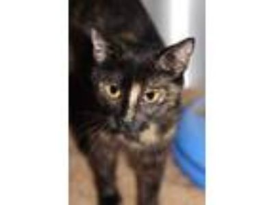 Adopt Foster hero needed with 4 kittens a White Domestic Shorthair / Domestic