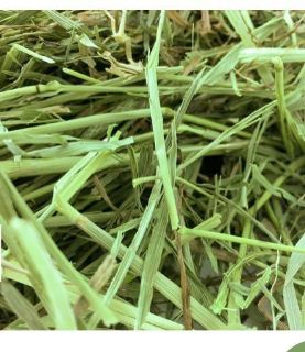 ISO FRESH TIMOTHY GRASS FOR MY BUNNY