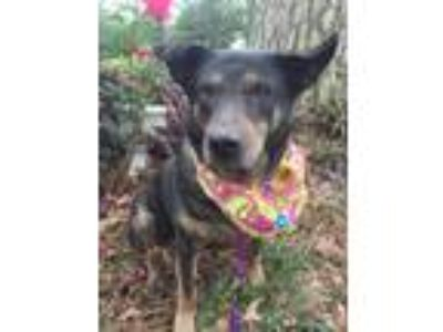 Adopt Hillary - SENIOR a Black - with Brown, Red, Golden