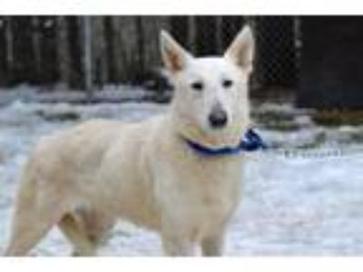 Adopt Aubrey a German Shepherd Dog