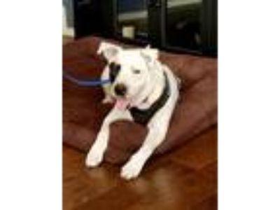 Adopt Ming a Terrier