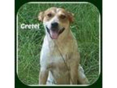 Adopt GRETEL a Australian Cattle Dog / Blue Heeler