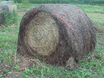 Old Round Bales of Hay (Texas Hill Country)