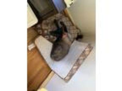 Adopt Trinity a Black Labrador Retriever dog in Lenexa, KS (25940903)