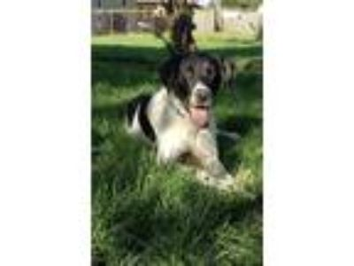 Adopt Archer a Pointer
