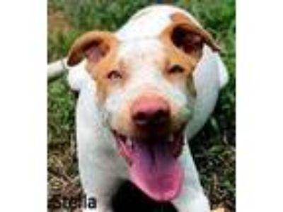 Adopt Stella a White Hound (Unknown Type) / Mixed dog in Palm Coast