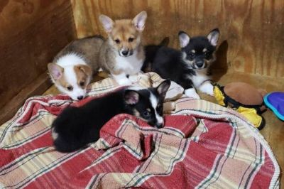 Puppy - Atascadero Classifieds - Claz.org