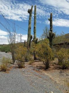 SAGUARO CACTUS REMOVAL - APACHE JUNCTION AZ 85220 85218 85219 85278 85119