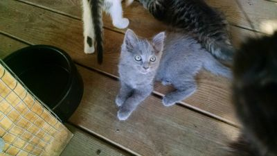 Free adorable kittens-litter trained-will deliver