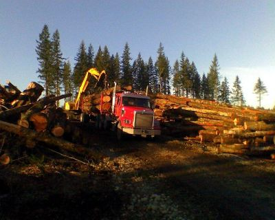 LOGGING COMPANY NW FOREST 1-8OO-LOG-ALOT TREE HARVESTING WASHINGTON STATE USA