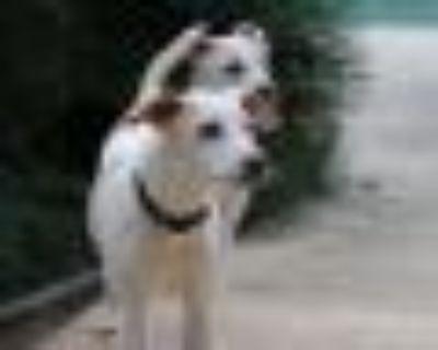 Bolt Terrier Dog