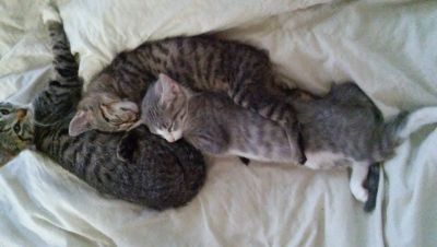 9 week old kittens free to good home
