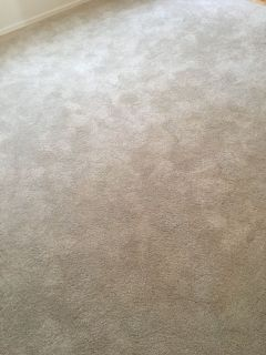 Brand new plush shag carpet