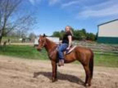 SOLDSuper Sweet disposition 7 year old Quarter horse