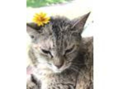 Adopt Sierra a Tortoiseshell Domestic Mediumhair / Mixed cat in Sw Ranches