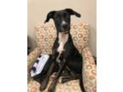 Adopt Louise a Black Terrier (Unknown Type, Small) / Mixed dog in Ottumwa
