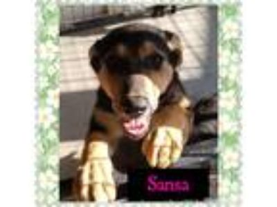 Adopt Sansa a Black - with Tan, Yellow or Fawn German Shepherd Dog / Mixed dog