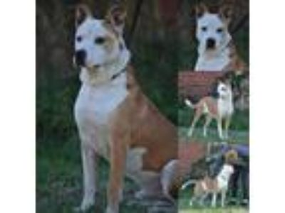 Adopt Dom a Mixed Breed