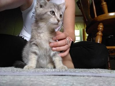Female free to good home. We think she is about 8 weeks old