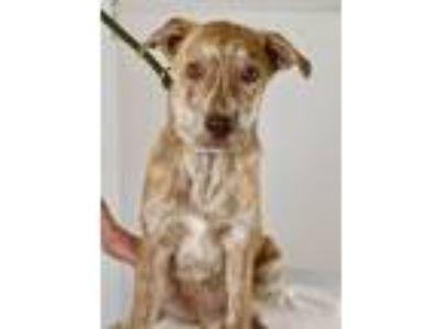 Adopt Damon Puppy a Hound