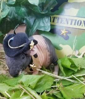 Skinny Pigs Hairless Guinnea Pigs