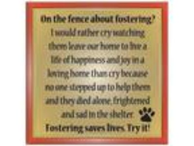 Adopt Fosters Needed! a Labrador Retriever