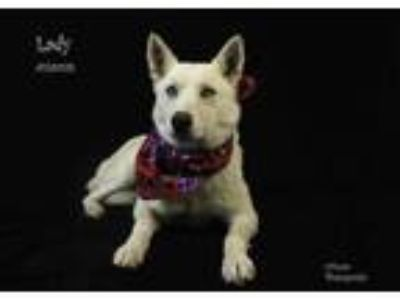 Adopt Dog a White Husky / Mixed dog in Thousand Palms, CA (25290042)