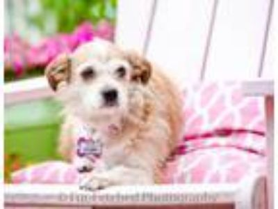 Adopt Story a Terrier