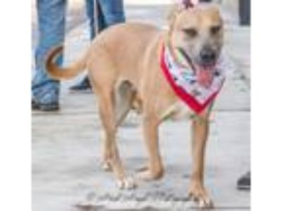 Adopt Poppy a German Shepherd Dog