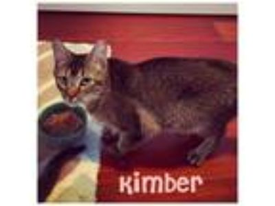 Adopt Kimber a Domestic Shorthair / Mixed cat in Raleigh, NC (25867300)