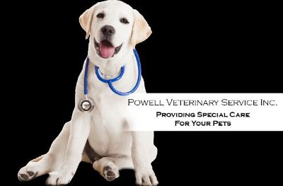 Providing Special Care For Your Pets