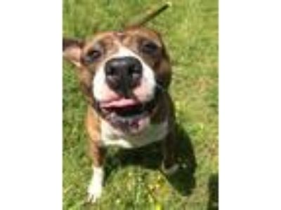 Adopt Christopher Robbin Aka 10 a Mixed Breed (Large) / Mixed dog in Portsmouth