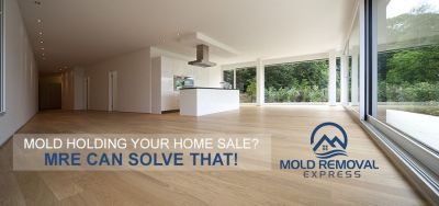 Professional Mold Test Denver At Mold Removal Express