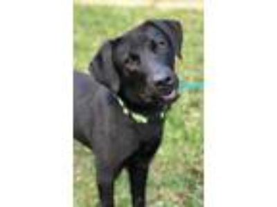 Adopt Wynter a Labrador Retriever / Mixed dog in Rockport, TX (25223180)