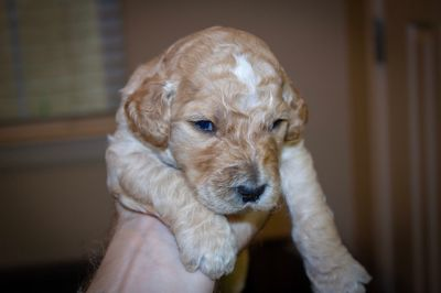 Puppy - Redding Classifieds - Claz org