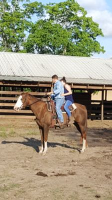 2005 APHA mare,