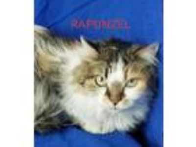 Adopt Rapunzel a Domestic Medium Hair
