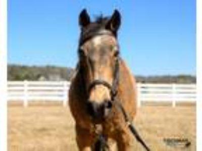 Adopt Nevada a Mustang