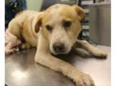 Adopt Dr. Wags a Mixed Breed