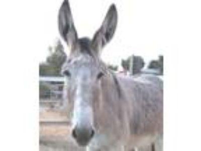 Adopt EYORE a Donkey