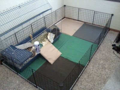 Guinea Pig Cage and Play Yard