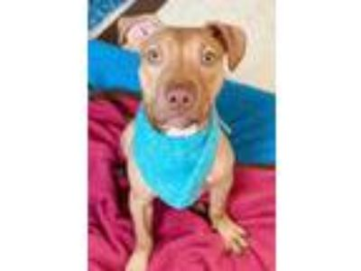 Adopt Zinger a Tan/Yellow/Fawn Mixed Breed (Medium) / Mixed dog in Binghamton
