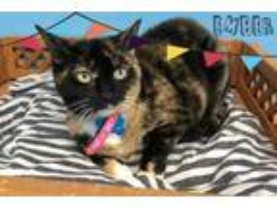 Adopt Ember a All Black Domestic Shorthair / Domestic Shorthair / Mixed cat in