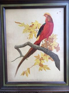 Large parrot bird picture in solid wood frame