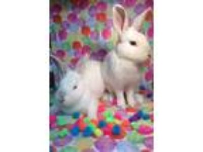 Adopt Haven and Gavin a Bunny Rabbit